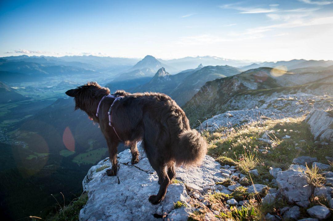 Hund am Berg