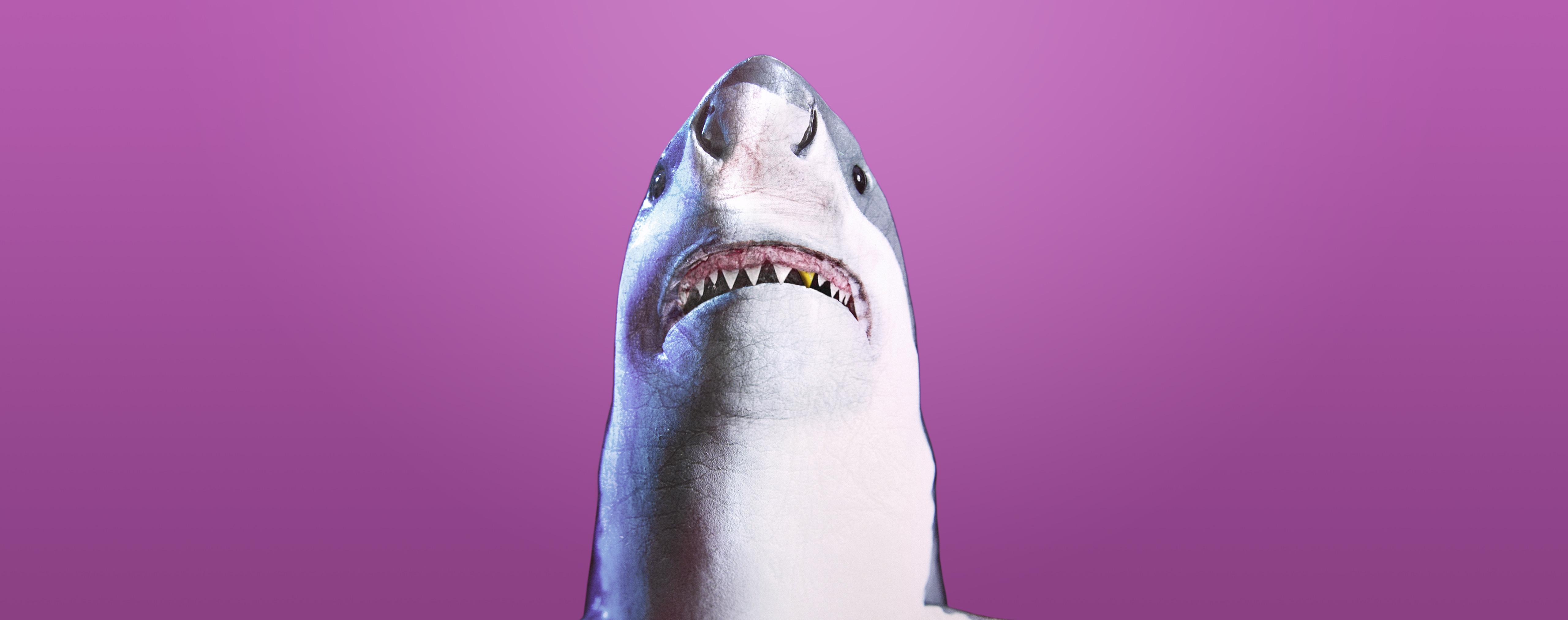 Weisser Hai auf violettem Hintergrund